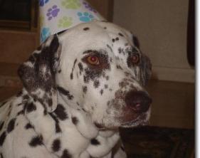 Brownie's 5th Birthday