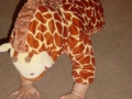 giraffe-5.jpg